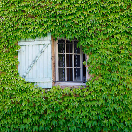 window surrounded by ivy of mediterranean house in the south of france
