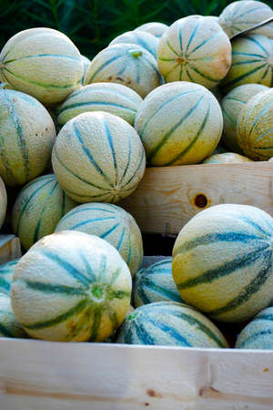 cantaloupe melon sold in market in provence-france