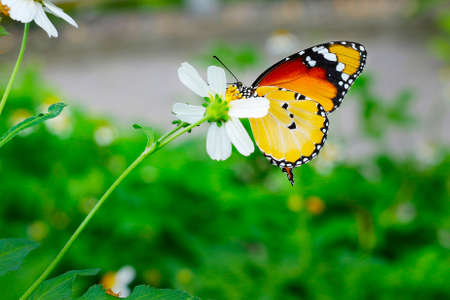 butterfly drilling a flower