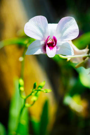 white orchid in a tropical garden