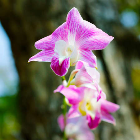 Pink orchid in a tropical garden