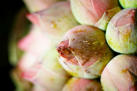close up of bunch of lotus flower Stock Photo