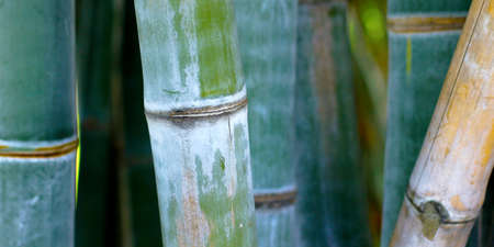 close up of green bamboo sticks in the rainforest