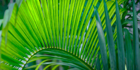 close up of green leaves in the rainforest