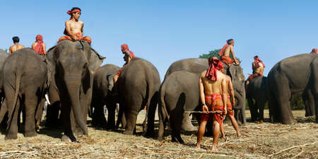 "In the city of Surin, located in the north east of Thailand -isan-, during November from the 20 until the 22, in the year of 2020, It was the ""elephant round up festival 2020"""