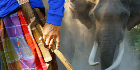 man being in charge of his elephant Stock fotó