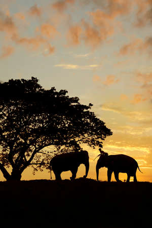 silhouette of 2 elephants under a tree during sunset