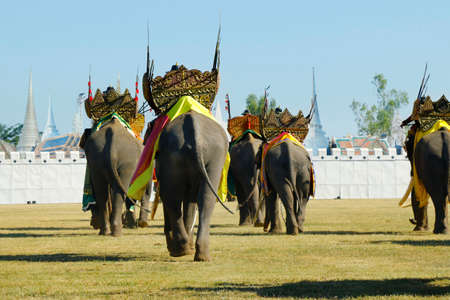 elephant during festival in surin-thailand