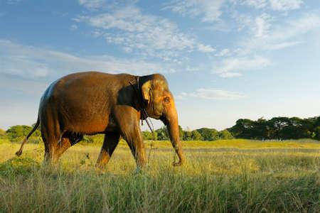 elephants walking in the savannah
