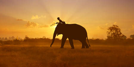 shape of elephant walking in the savannah during sunset