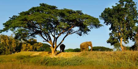 elephant under a tree in the savannah Stock fotó