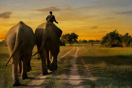 elephants walking in the savannah during sunset