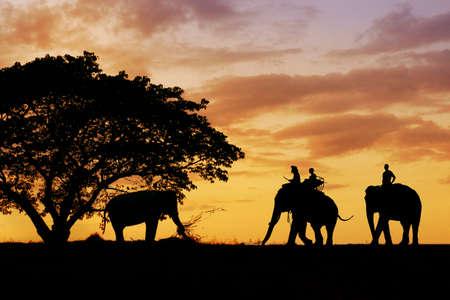 shape of elephant under a tree during sunset