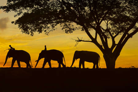 shape of elephant under a tree during sunset
