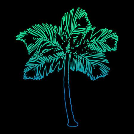 Palm tree silhouette at dark background. Çizim