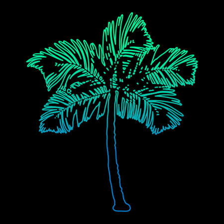 Palm tree silhouette at dark background. Illustration