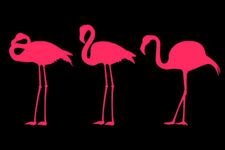 Silhouettes of three pink flamingos on black background Standard-Bild - 132637030