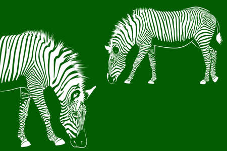Two Zebras on green background. Vector illustration EPS10 Standard-Bild - 132803256