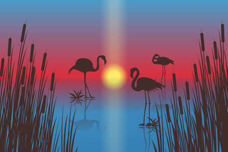 Sunset landscape with flamingo silhouettes. Vector EPS10 Иллюстрация