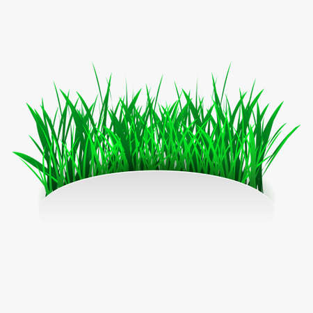 Green grass in in cut out paper style. Eco and environment design element. Vector EPS10 矢量图像