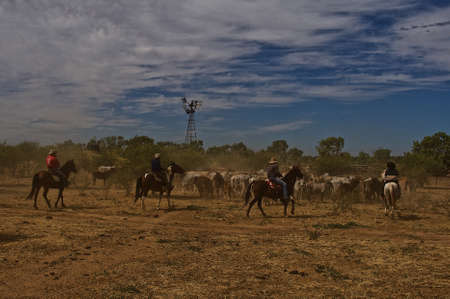 australia farm: Mustering Cattle by Cowboys