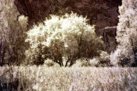 tree infrared