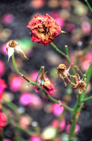 withered flower: withered flower with blurred background