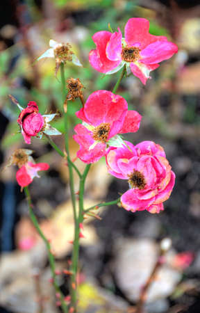 pink flowers on blurred background Stock Photo