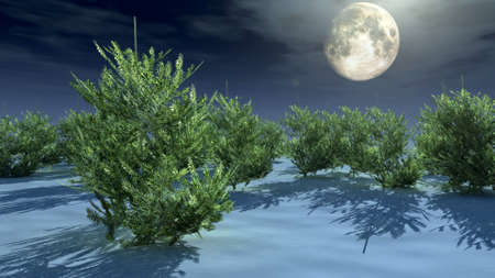 christmas trees under moonlight photo