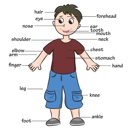 Cartoon child  Vocabulary of body parts  Vector