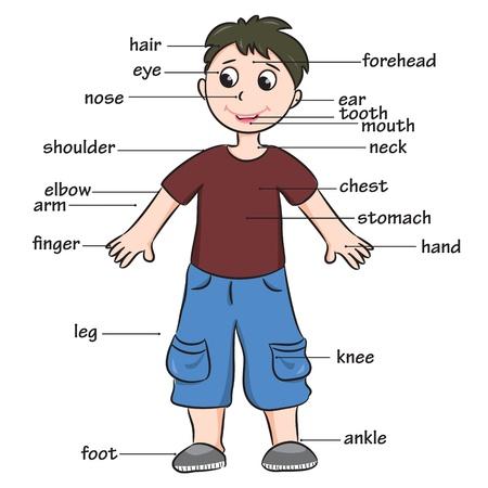 corpo: Desenhos animados Vocabulário criança de partes do corpo