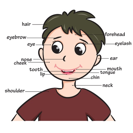 Cartoon kind Boy Woordenschat van het gezicht van onderdelen illustratie