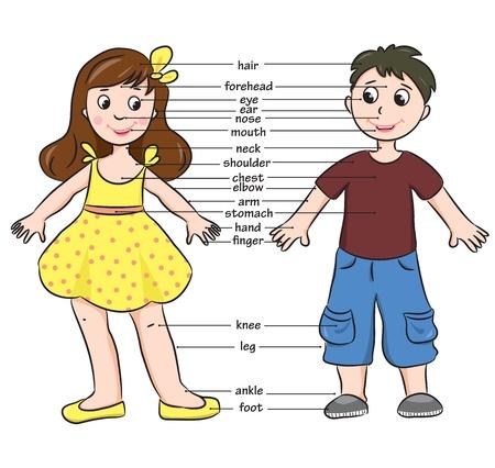cuerpo humano: Muchacho de la historieta y vocabulario chica de cuerpo ilustraci�n de las piezas Vectores