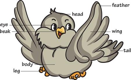 Cartoon uccello. Vocabolario di parti del corpo.