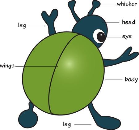 Cartoon bug. Vocabolario di parti del corpo. Illustrazione vettoriale.