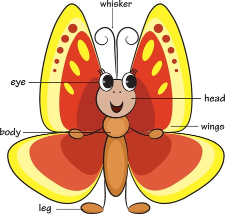 body language: Cute cartoon butterfly. Vocabulary of body parts Illustration