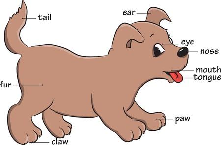 nursery education: Un perro lindo de la historieta. Vocabulario de las partes del cuerpo