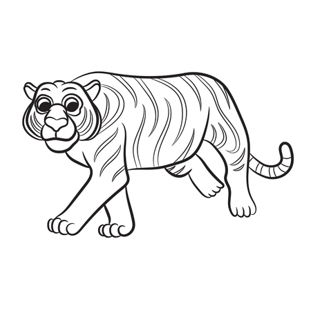 panthera: Outlined tiger vector illustration. Isolated on white.