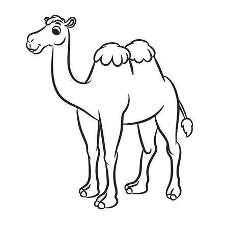 camel in desert: Cartoon illustration of cute camel outlined. Vector illustration.