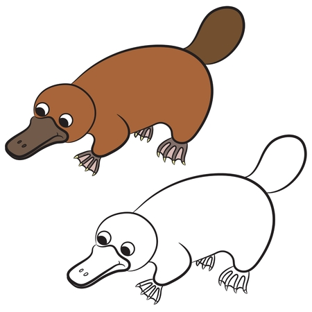 platypus: Cartoon illustration of platypus or duckbill animal on a white background. Coloring book.