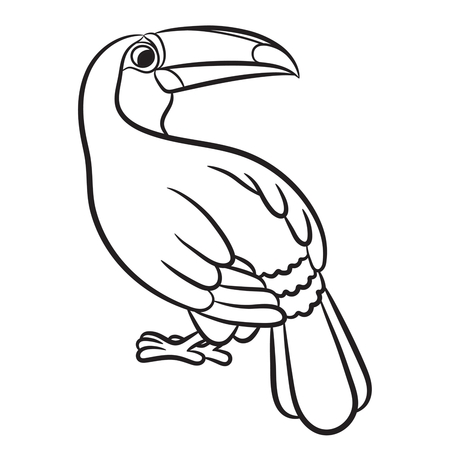 tucan: Toucan bird illustration outlined. Vector