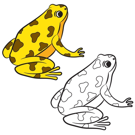 poison dart: Cartoon of Poison-Dart Frog. Coloring page. Vector