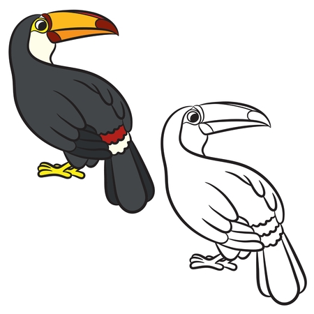 Toucan Bird Illustration Coloring Page Vector Royalty Free Cliparts Vectors And Stock Image 43574640
