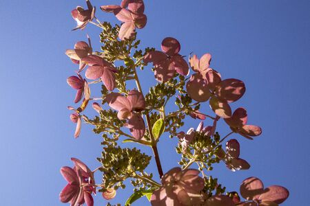 flowers in the sky Zdjęcie Seryjne