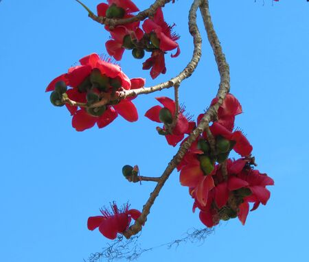 Red flowers again  blue sky