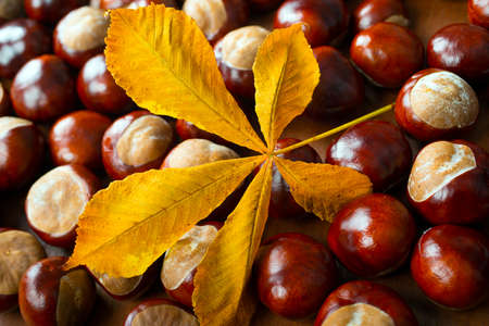 chestnuts with leaf  photo