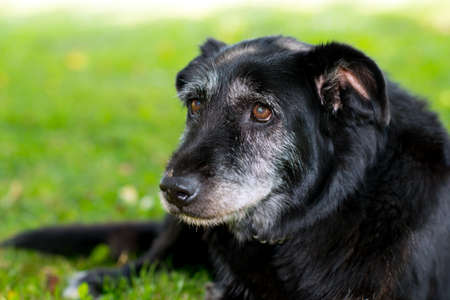 old black dog is sitting in the meadow