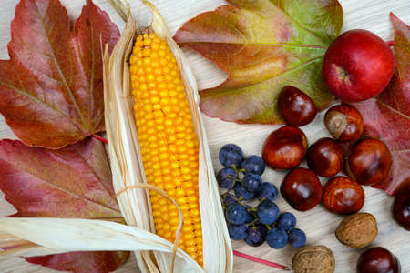 corncob: autumn still life- grapes, leaves, apple, corncob,chestnut,and walnut  on wooden ground