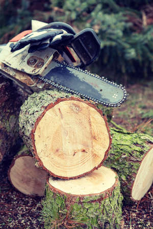 worn chainsaw on fresh felled tree