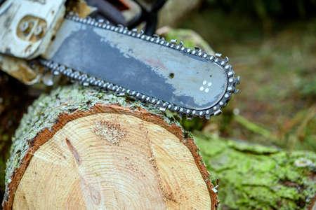worn chainsaw on fresh felled tree